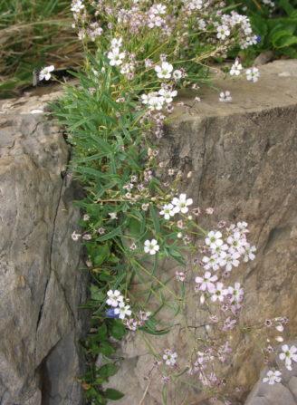 Foto zum Link «Die Pflanzenwelt im Kanton St.Gallen»