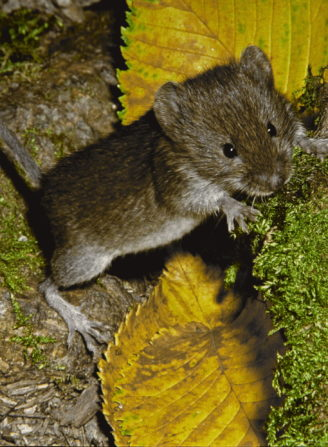 Foto zum Link «Katze, zeig mir deine Maus»