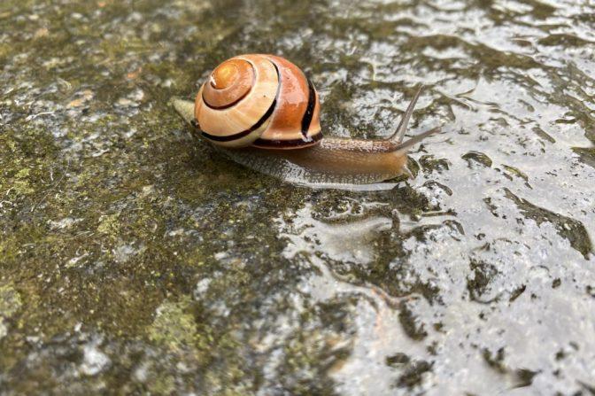 Foto zum Link «Die wirbellose Tierwelt im Kanton St.Gallen»