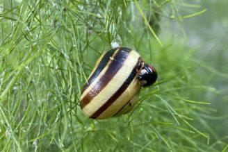 Foto zum Link «Wirbellose»