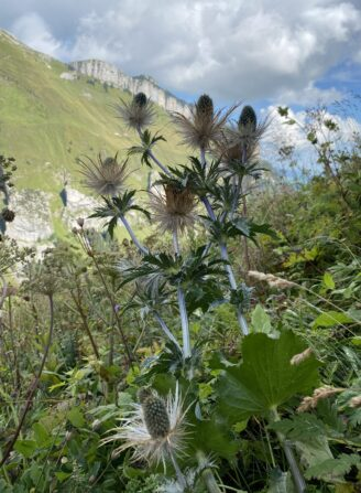 Foto zum Link «Appenzeller Pflanzenwelt»